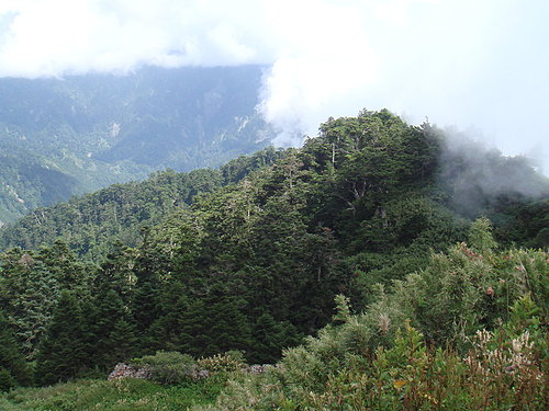 埔里---武嶺沿途的風景3.jpg