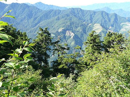 高山的天氣及低污染 讓植物們看起來都生氣盎然.jpg