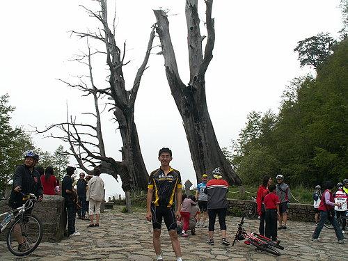 夫妻樹前 --- 小葉子.jpg