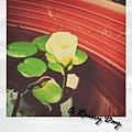 0828-小蓮花與颱風天.