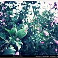 0906-微粉的氛圍.
