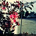 0910-我不懂的植物:D