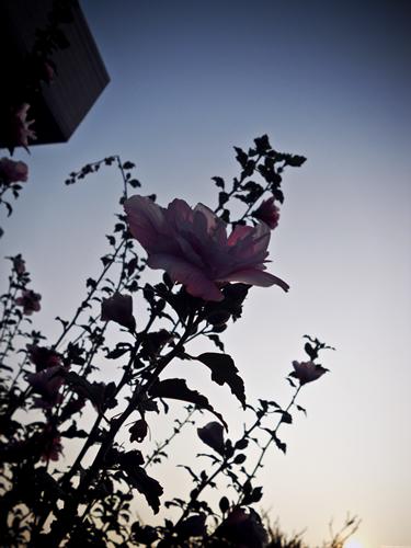 0910-花影.