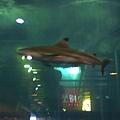 忘了在哪個休息站拍的鯊魚
