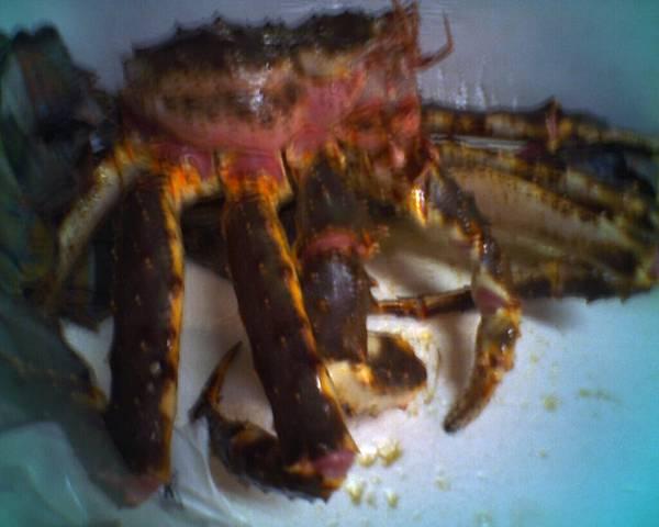 傳說中的帝王蟹2