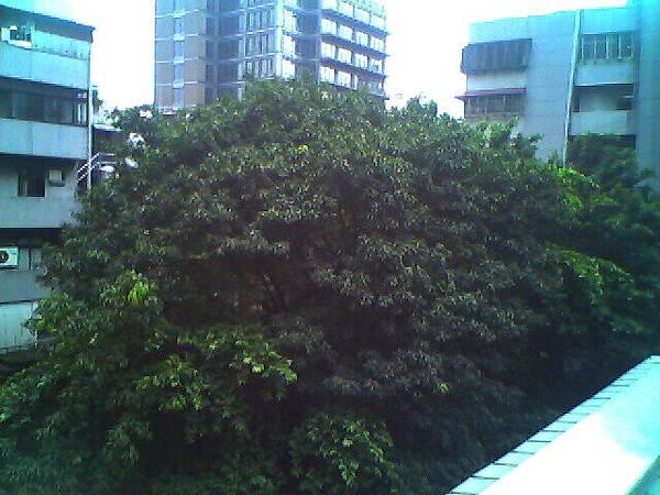 補習班外面的樹