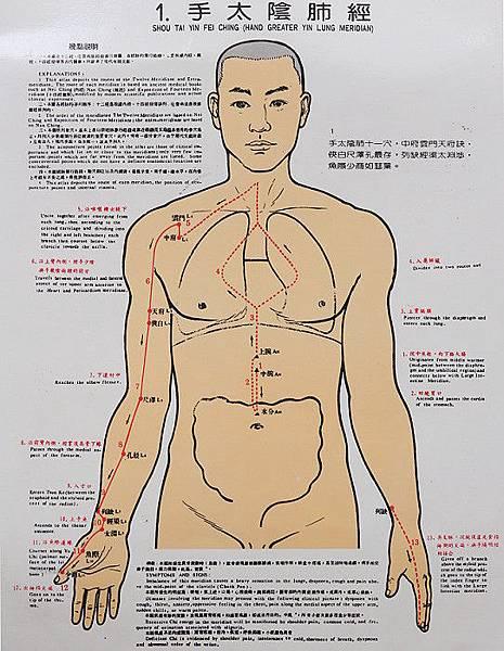 手太陰肺經循行圖