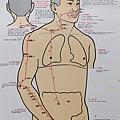 手陽明大腸經循行圖
