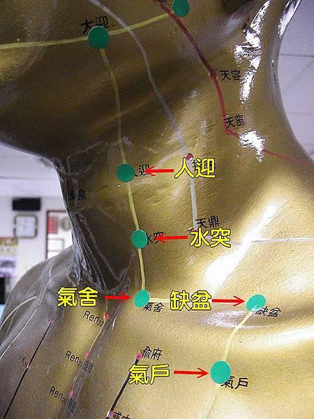 足陽明胃經穴位3