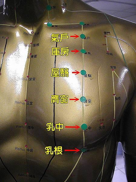 足陽明胃經穴位4