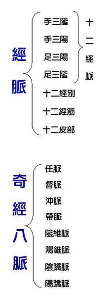 經絡組織系統1