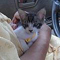 噹噹嗯貓小時候
