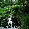 離魂(植物園荷花池)