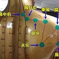 手太陽小腸經3
