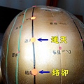 太陽膀胱經3.jpg