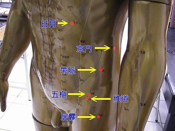 足少陽膽經6