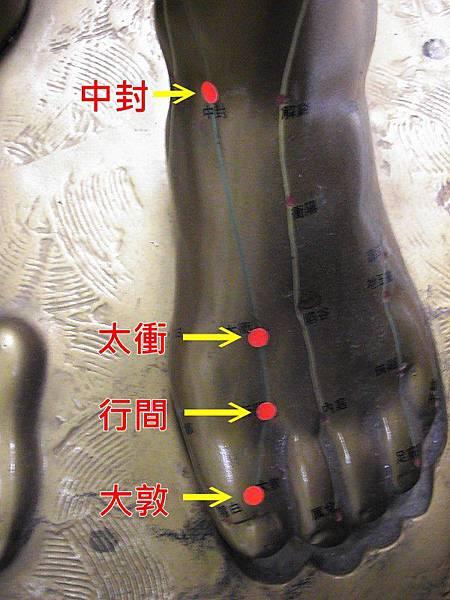 足厥陰肝經1