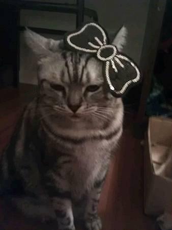 正港Hello kitty