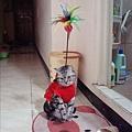 貓型鬥貓棒