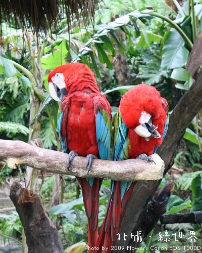 綠世界 - 綠翼金剛鸚鵡.jpg