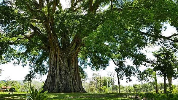 big old tree.jpg