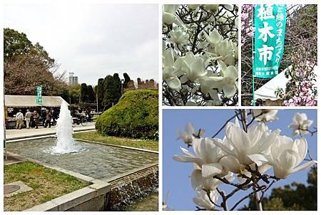 大板公植木市~木蓮 (2)