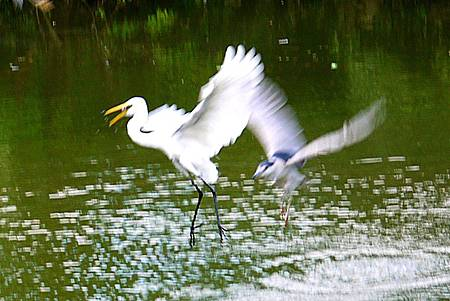 大安森林公園賞鳥趣. (35)