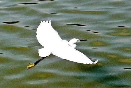大安森林公園賞鳥趣. (45)