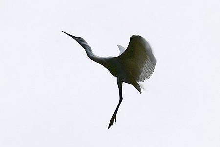 大安森林公園賞鳥趣. (46)