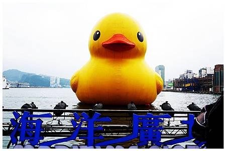 黃色小鴨遊基隆 (6)
