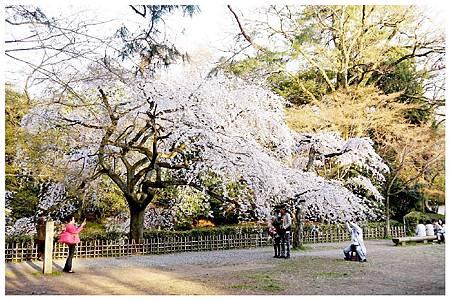 P1290610 京都御苑櫻花 (11).jpg