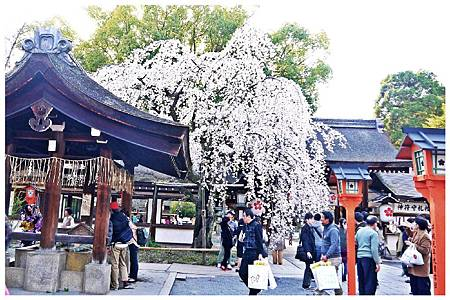 P1430963 平野神社 a (1).jpg
