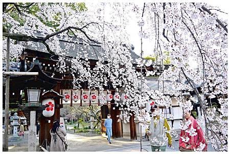 P1430963 平野神社 a (2).jpg
