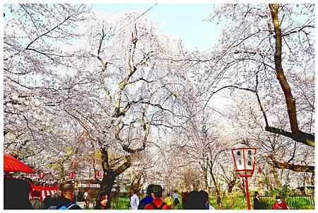 P1430963 平野神社 a (3).jpg