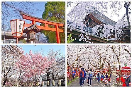 P1430963 平野神社 a (5).jpg