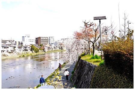 P1300116 鴨川 (96).jpg