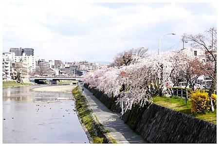 P1300116 鴨川 (105).jpg