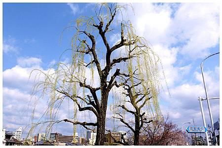 P1300116 鴨川 (112).jpg
