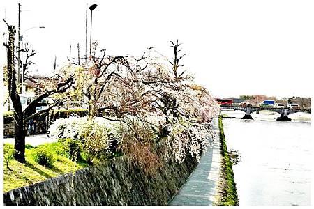 P1300116 鴨川 (118)c.jpg