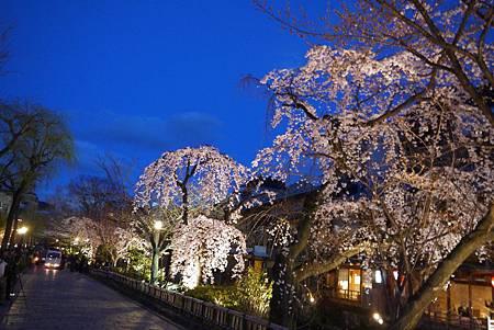 京都~高瀨川夜櫻 (2).jpg