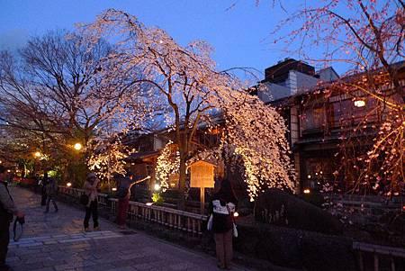 京都~高瀨川夜櫻 (3).jpg
