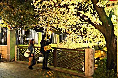 京都~高瀨川夜櫻 (5).jpg