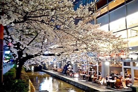 京都~高瀨川夜櫻 (7).jpg