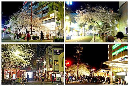 京都~高瀨川夜櫻 (8).jpg
