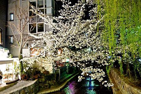 京都~高瀨川夜櫻 (9).jpg
