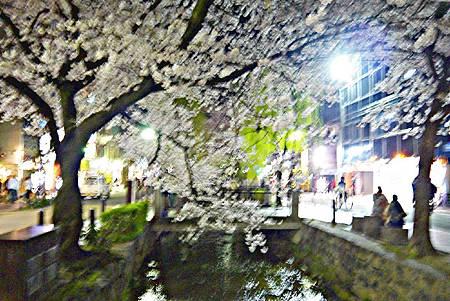 京都~高瀨川夜櫻 (10).jpg