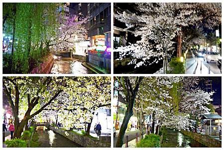 京都~高瀨川夜櫻 (12).jpg