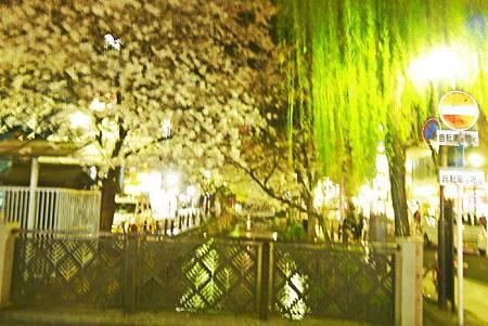 京都~高瀨川夜櫻 (13).jpg