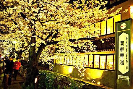 京都~高瀨川夜櫻 (14).jpg