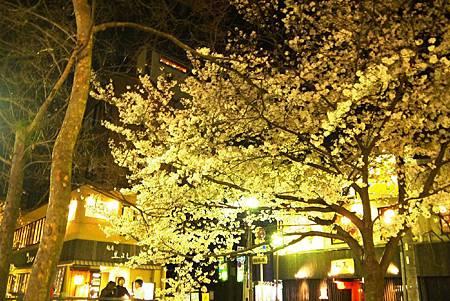 京都~高瀨川夜櫻 (15).jpg